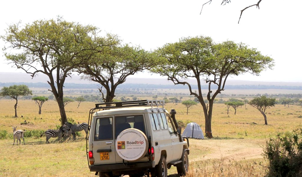 Camping in the wilderness with zebras in Maasai Mara