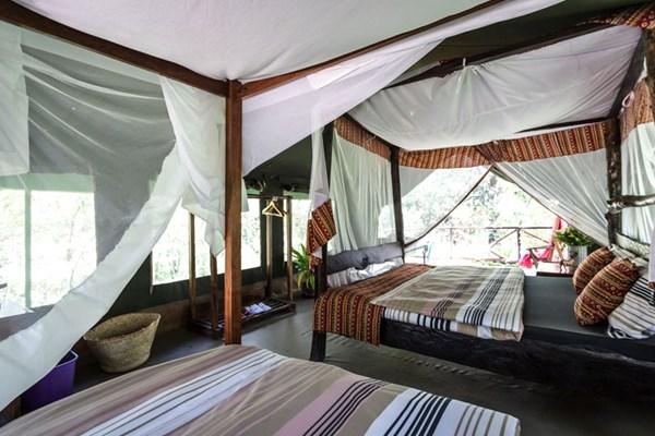 Aruba Mara Camp - $$