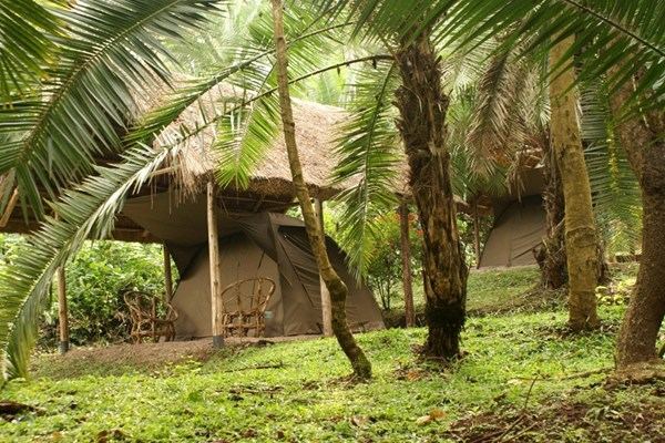 Kibale Forest Camp - $$