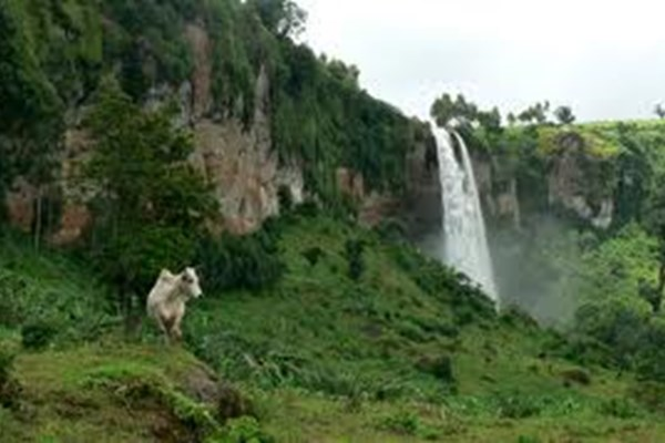 The Crows Nest- $ - Sipi Falls